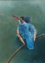 baby kingfisher 1996