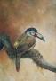 baby toucan 1999