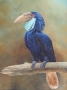 wreathed hornbill 2008