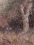 flutter on grass 1993