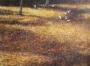 golden leaves 1992