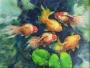 goldfish1 2010