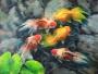 goldfish2 2010