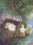love nest 1994