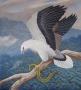 sea eagle 1995