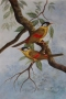 sunbirds 1987-95