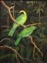 sunbirds 1988