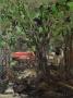 tree of life 2013