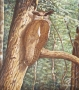tree owl 1995