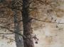 twin trees 1995