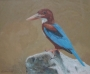 white breasted kingfisher 1993