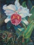 white orchid 1992