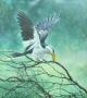yellow-bill hornbill 1999