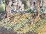 yellow carpet, angkor 2007